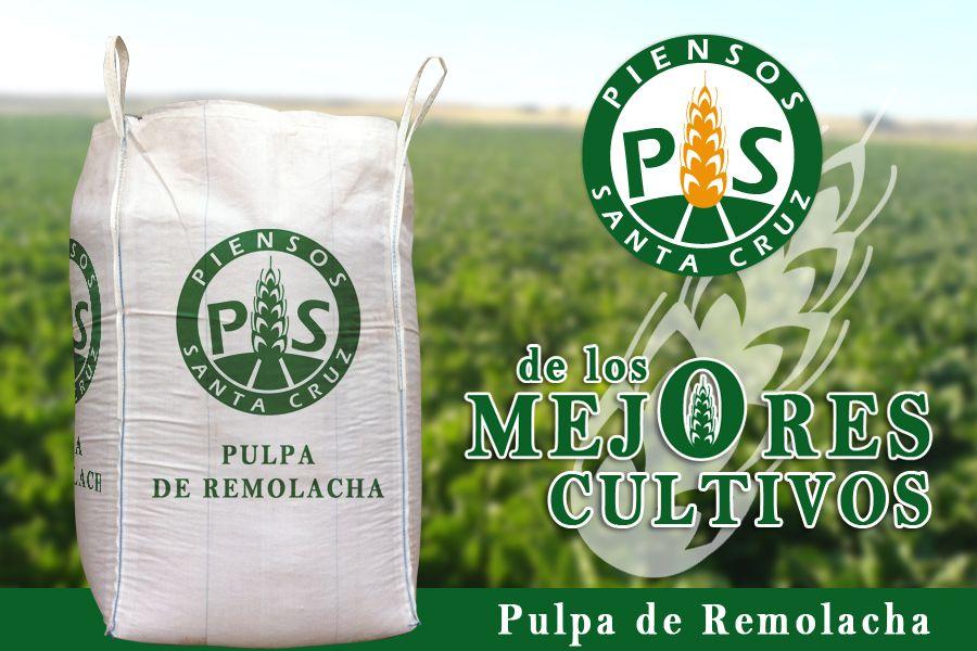 Pulpa de Remolacha