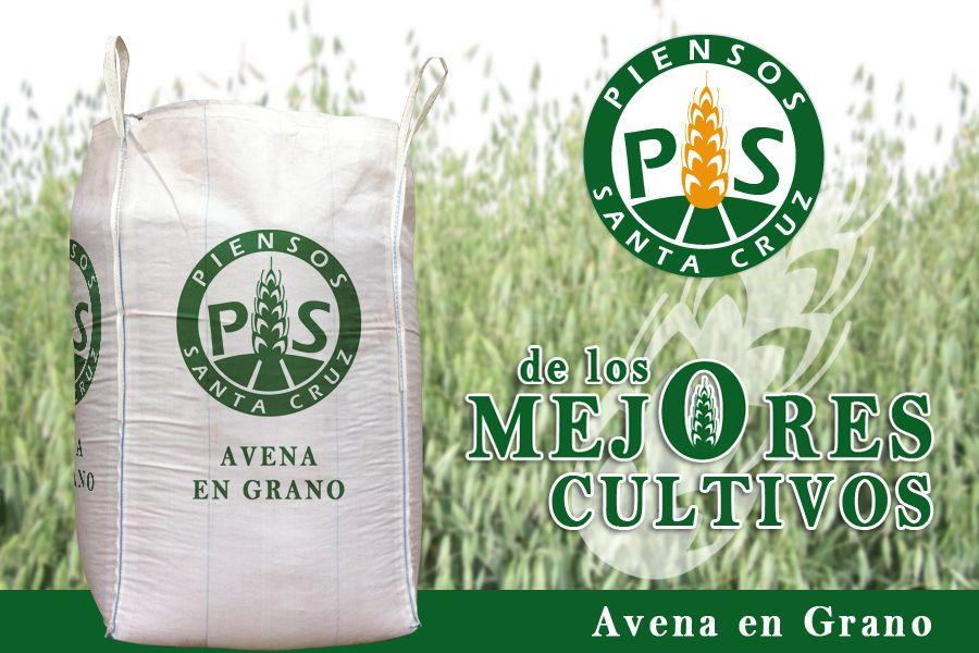 Saca de Avena